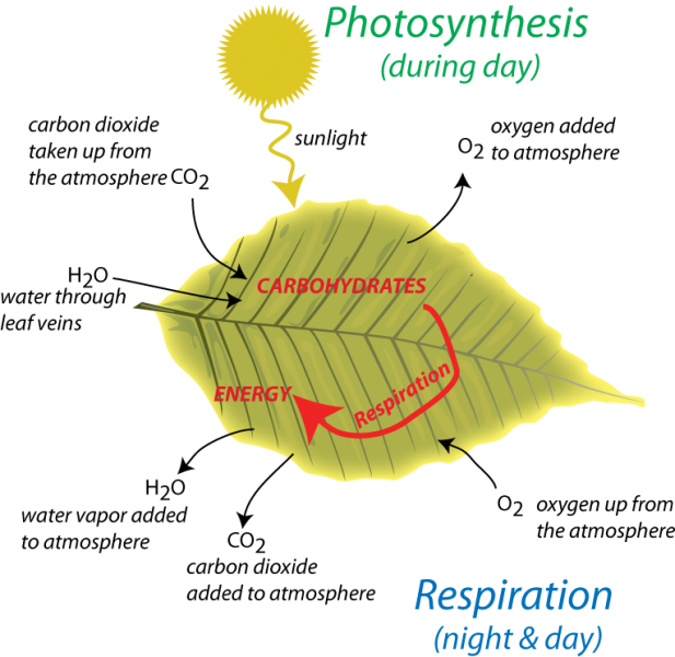 photosynthesis process Google Search Photosynthesis