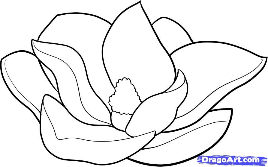 How To Draw A Magnolia by Dawn | Flower coloring pages ...