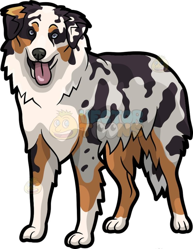 An Adorable Australian Shepherd Dog Cartoon Stock Clip Art