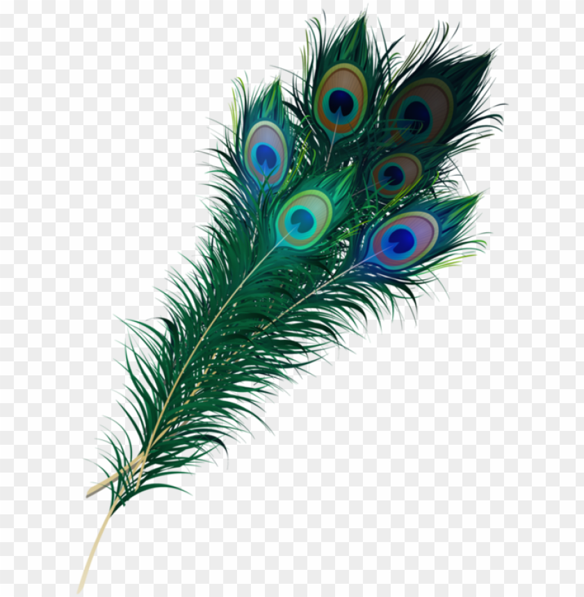 Wispy Peacock Feathers Peacock Peacock Feather Feather Png Transparent Clipart Image And Psd File For Free Download Peacock Feathers Feather Vector Peacock Feather