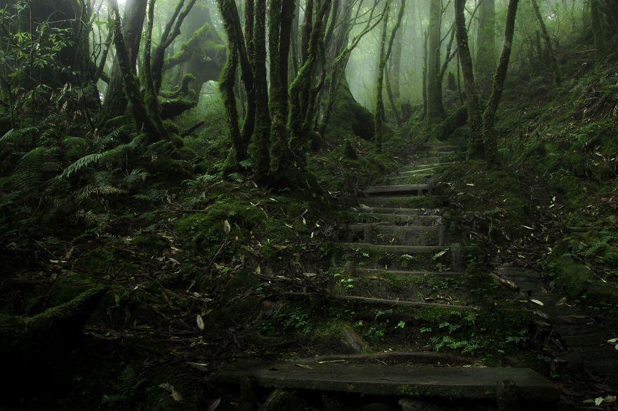 Quand les forêts deviennent mystérieuses - beQbe