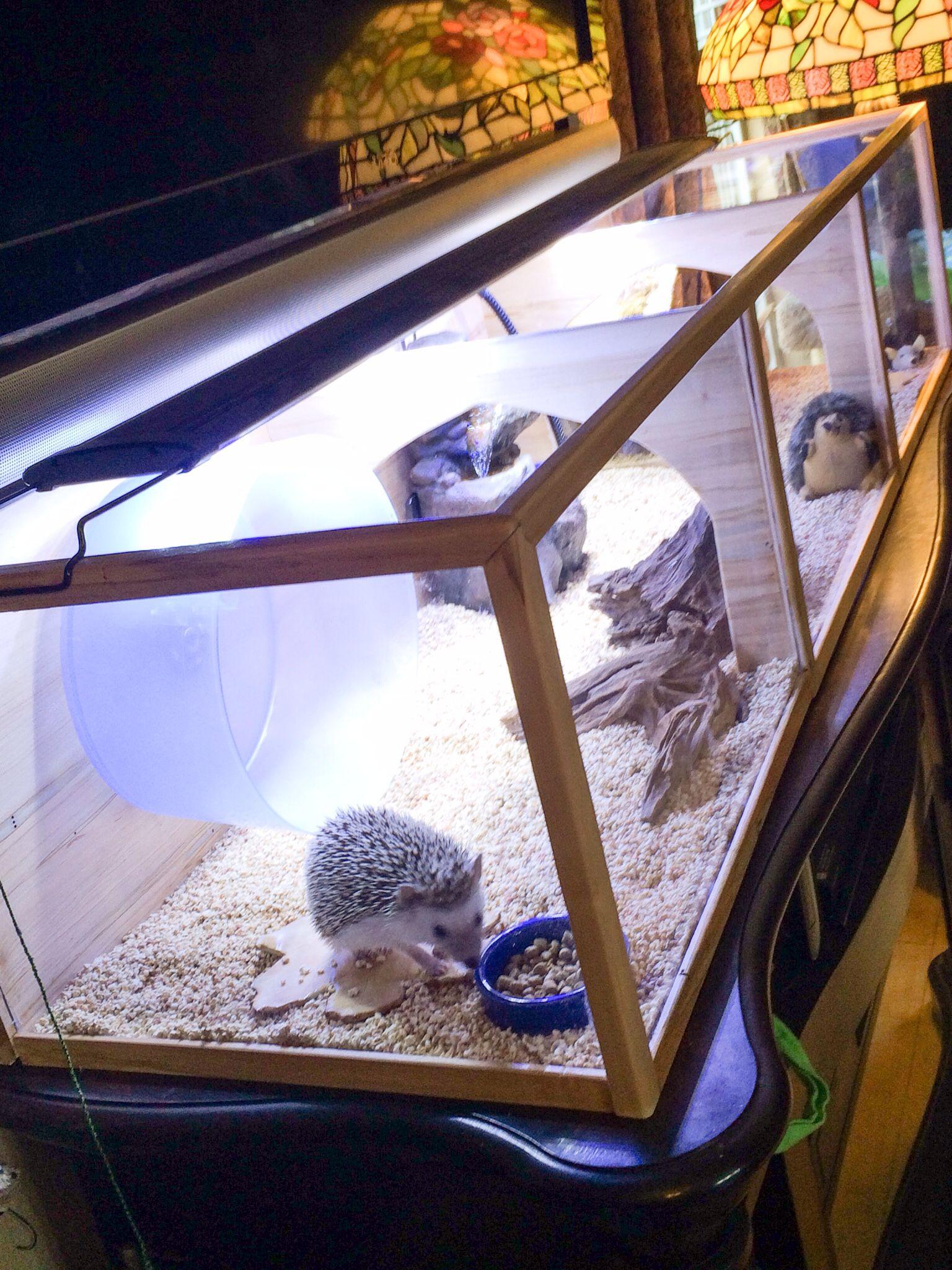 More custom enclosure | Hedgehog pet, Hedgehog cage ...