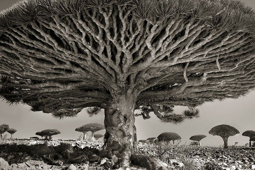 Photographer Spends 14 Years Documenting the Worlds Most Spectacular Trees
