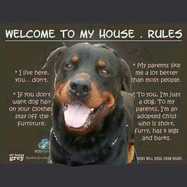 Yeah Pretty Much 3 My Pups Rottweiler Funny Rottweiler