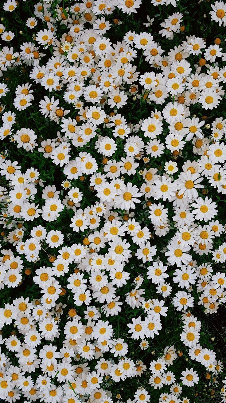 Frühlingsblumen iPhone Plus Wallpaper Blumen iPhon  Blumen Natur Ideen