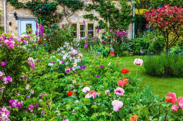 How to grow a cottage garden