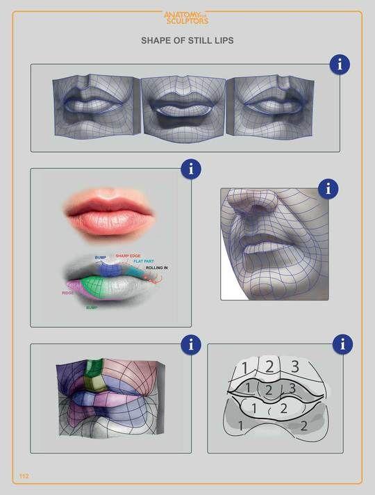 Anatomy For Sculptors: Understanding the Human Figure ...