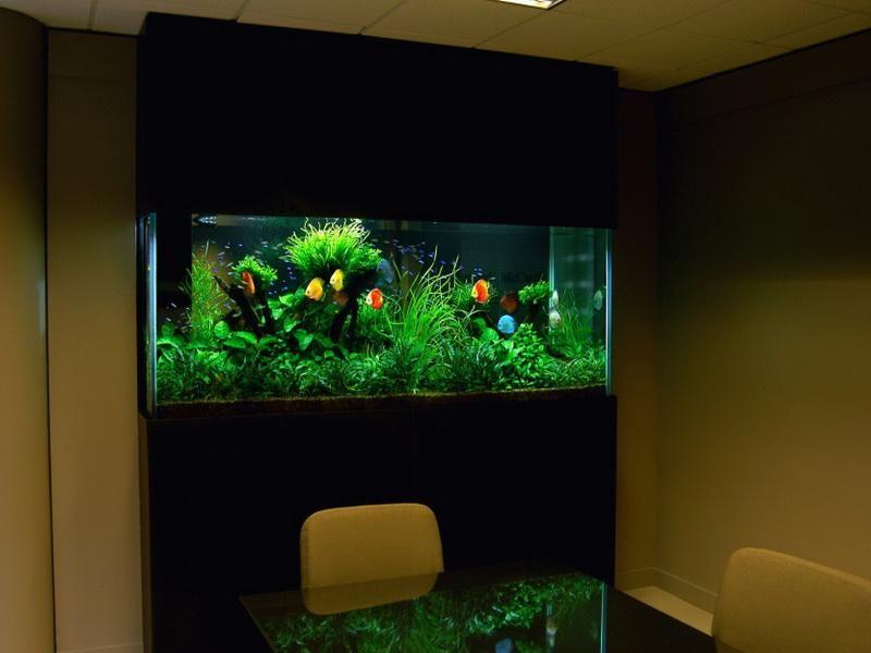 Fish Tank Decor Ideas