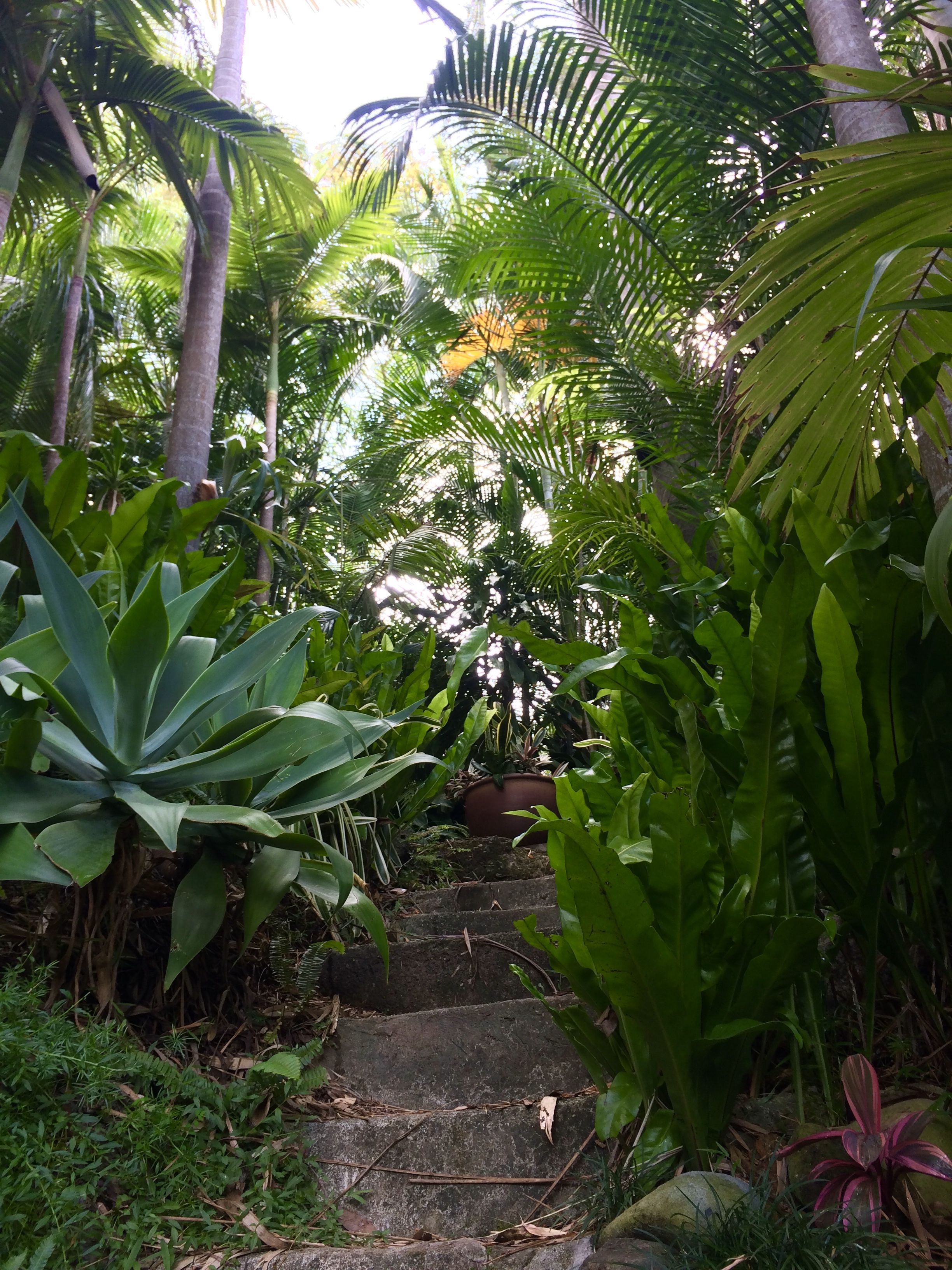 Bruce's tropical garden Brisbane | Tropical garden ...