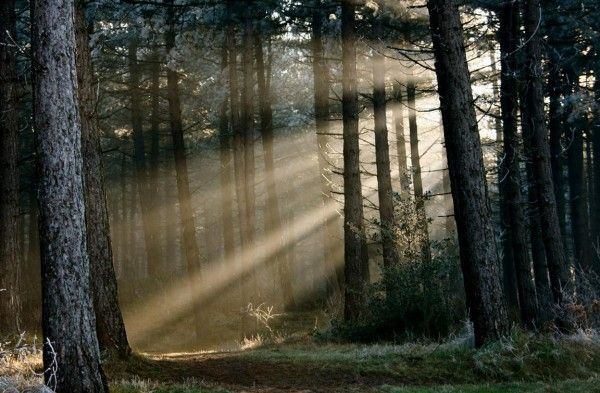 lichtval: (Belichting) de manier waarop het licht in een foto schijnt.