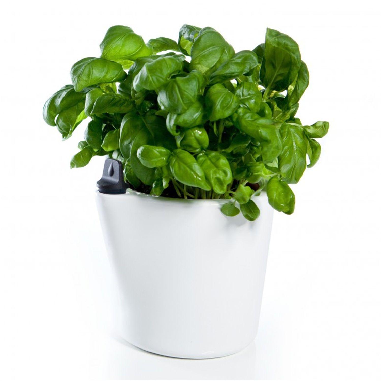 royal vkb kruidenpot herb 2 o self watering pot wishlist
