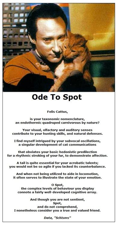 Data S Cat Spot Poem