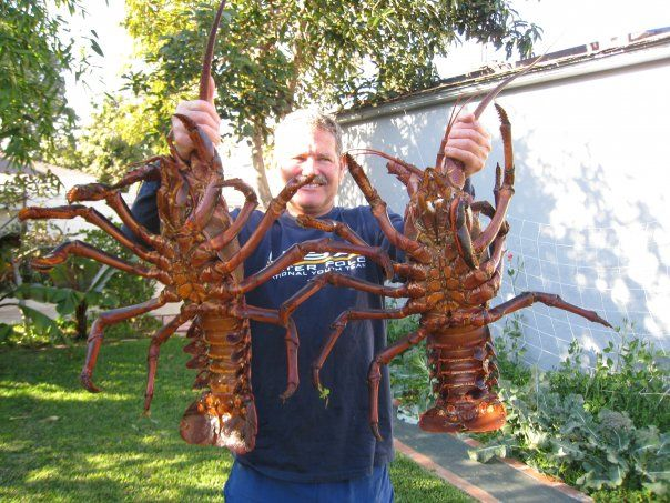 World Record Lobster 44.5 Pounds   Record Lobster   Materialize my pins on my boards to me now ...