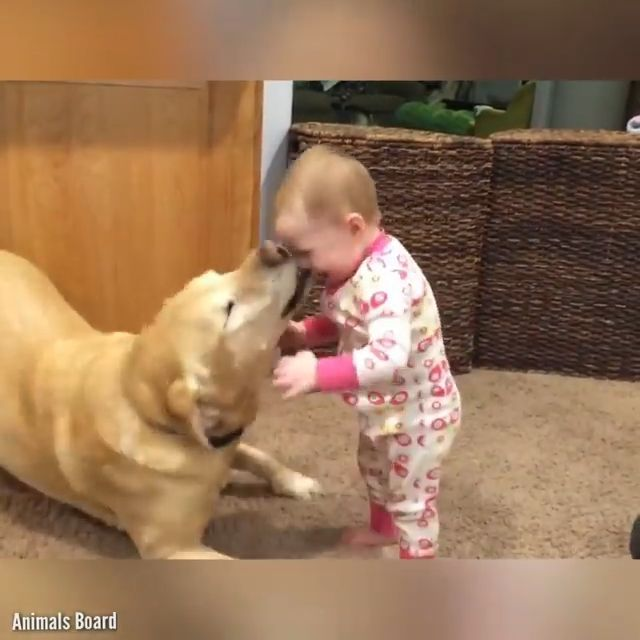 Babies laughing their asses off because of their dogs - Lovely and Useless - #asses #Babies #dogs #laughing #Lovely #Useless