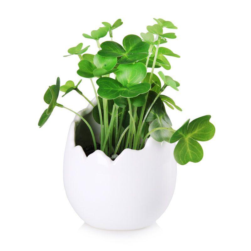 Stroik Skorupka Home You 35 Zl Plants