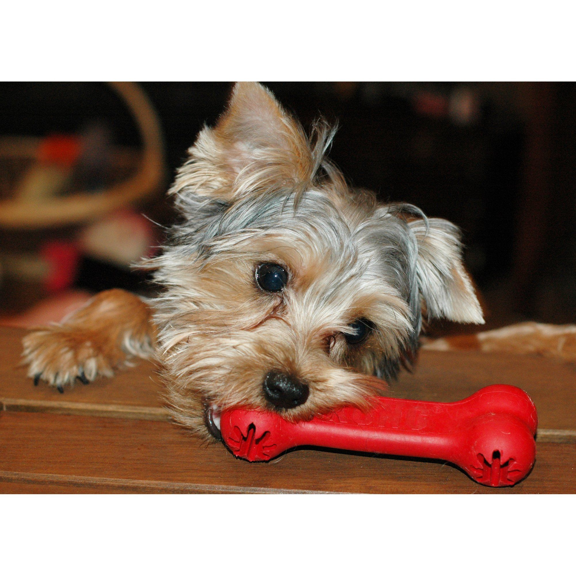 Kong Goodie Bone Dog Toy Small Red Best Dog Toys Dog Toys Dogs