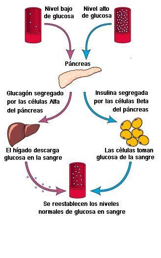 nivel de azucar normal del cuerpo humano
