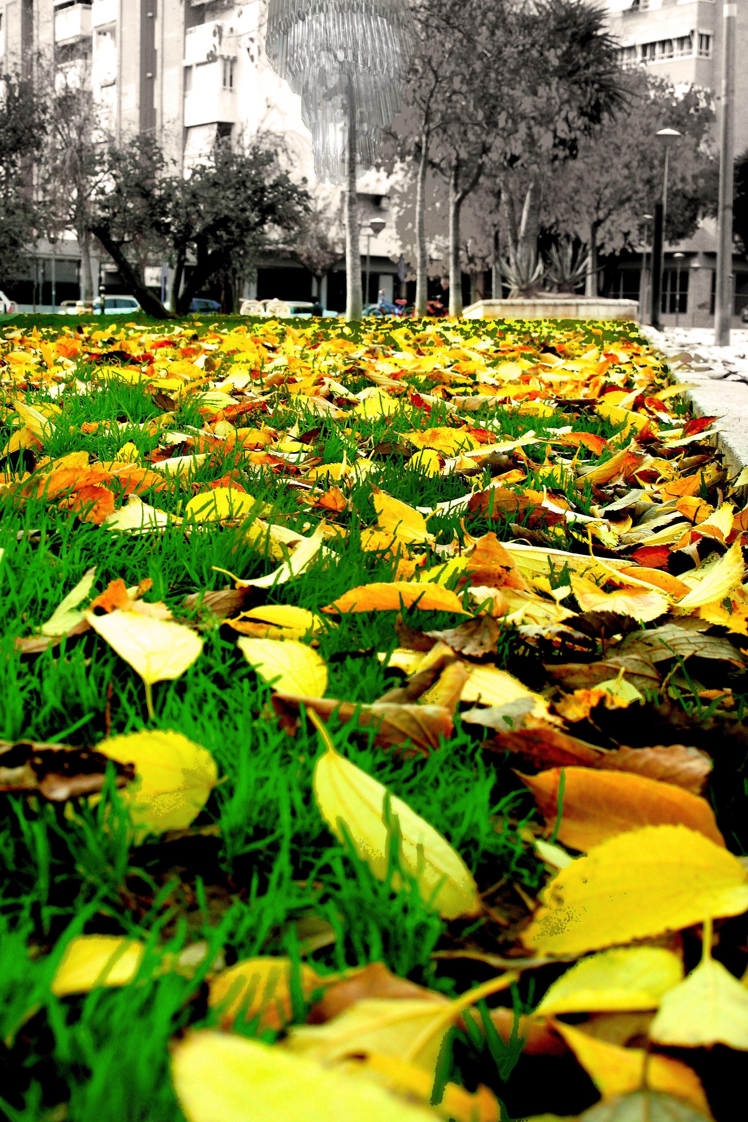 el otoño es lo que tiene