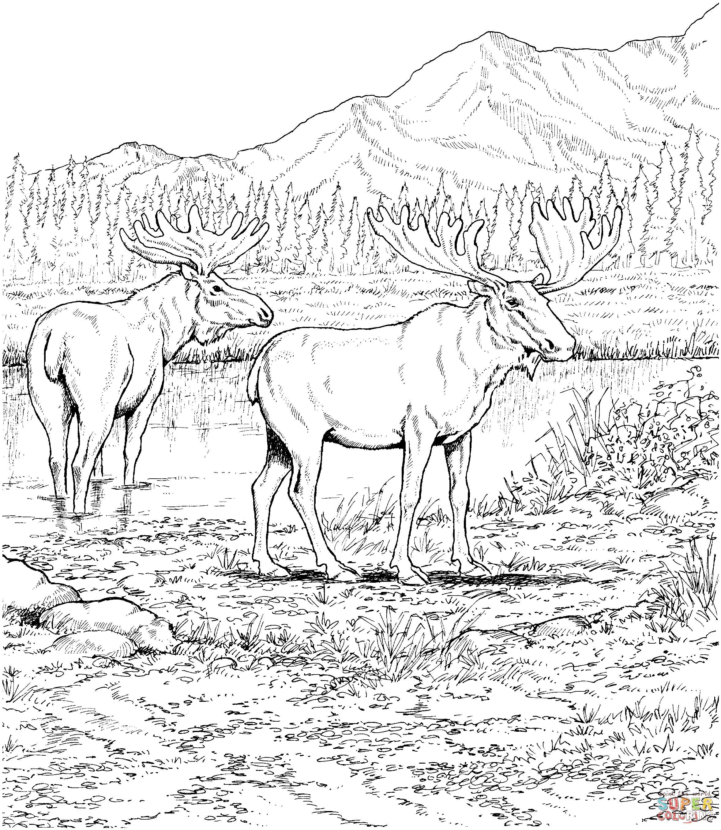 Biome Map Coloring Worksheet Unique Two Moose Deers