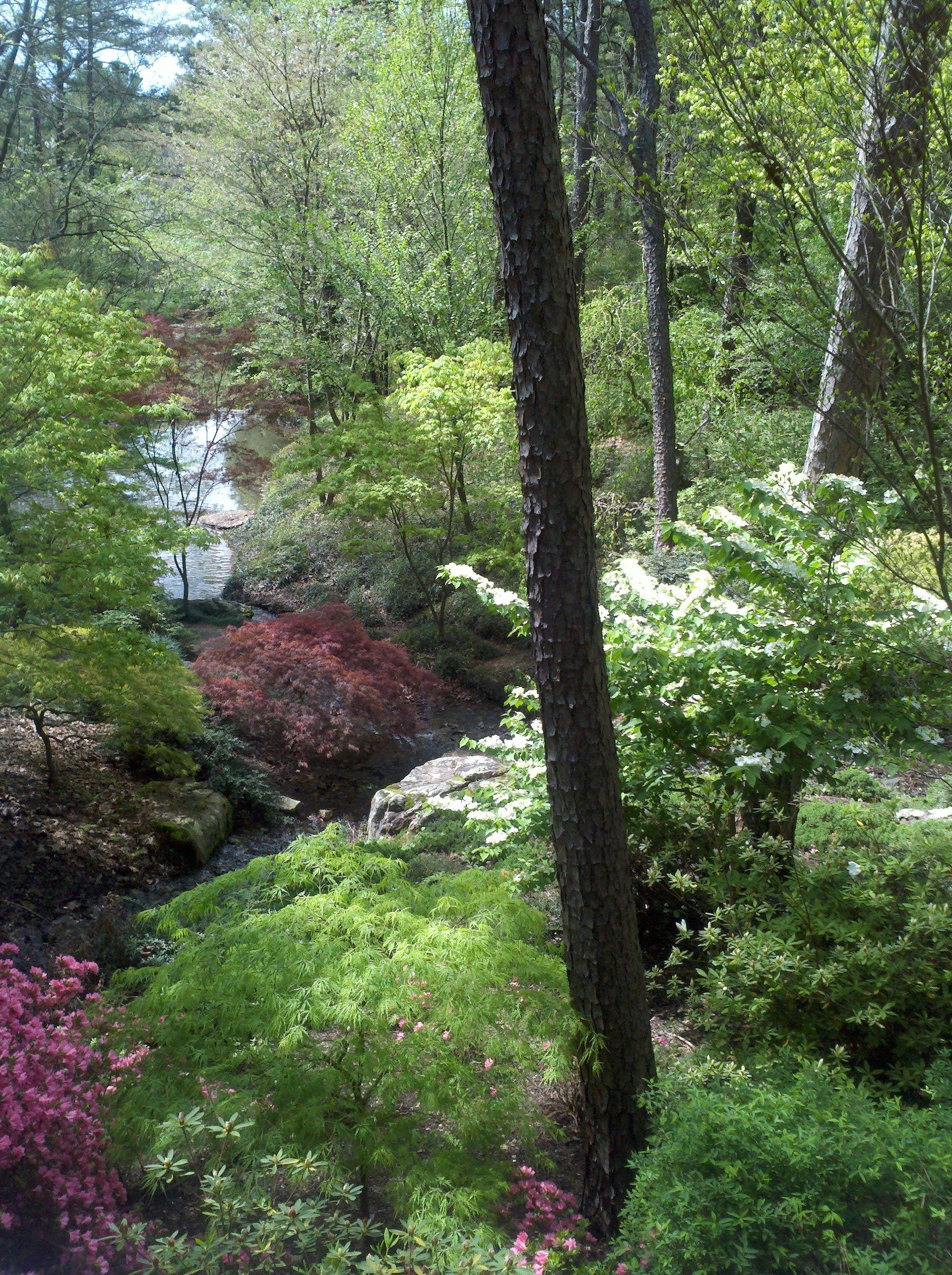 Garvin Woodland Gardens near Little Rock, Arkansas Little Rock, Woodland Garden, Botanical Gardens