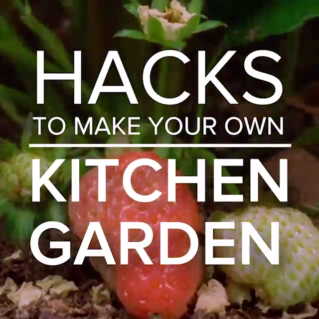 Photo of Hacks To Make Your Own Kitchen Garden?