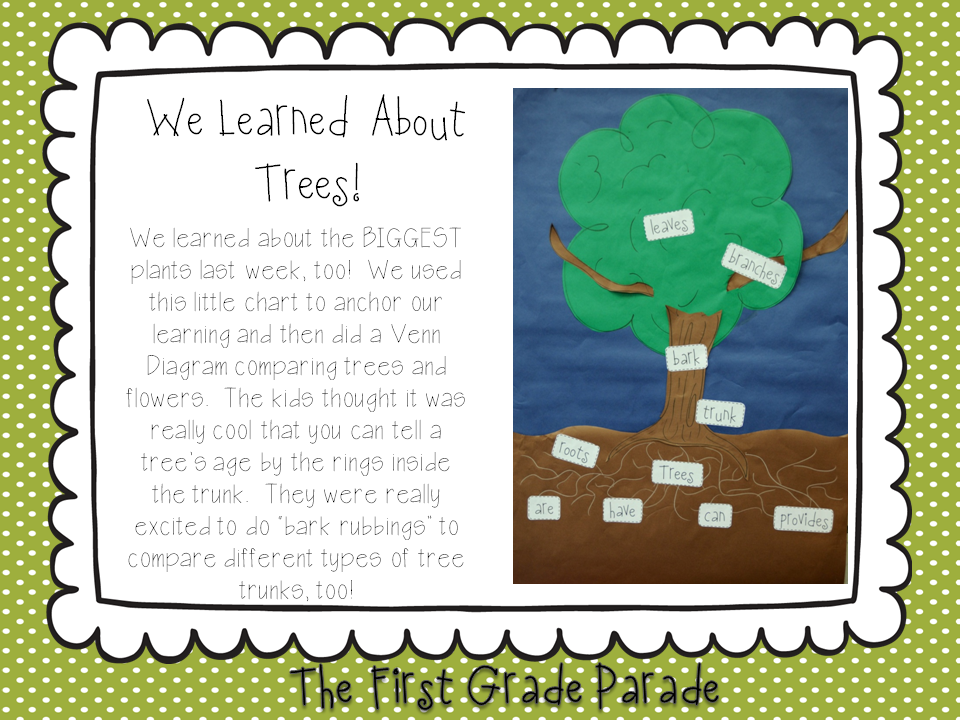 Learning About Trees Tree Map | Teach Science | First grade