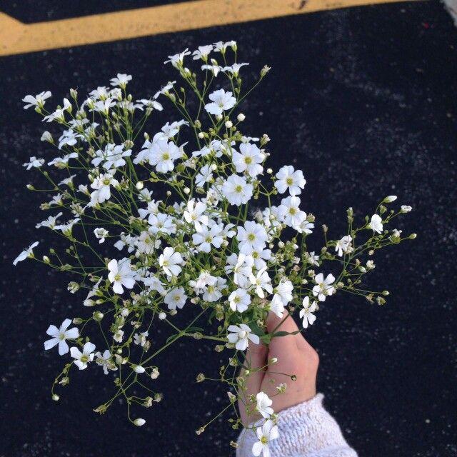 ورد ابيض للقلب الابيض Pretty Flowers Flowers Bloom