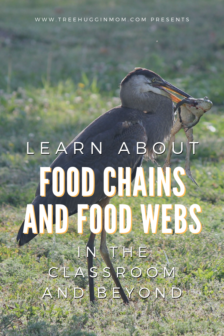 Food Chains For Kids The Circle of Life Nature