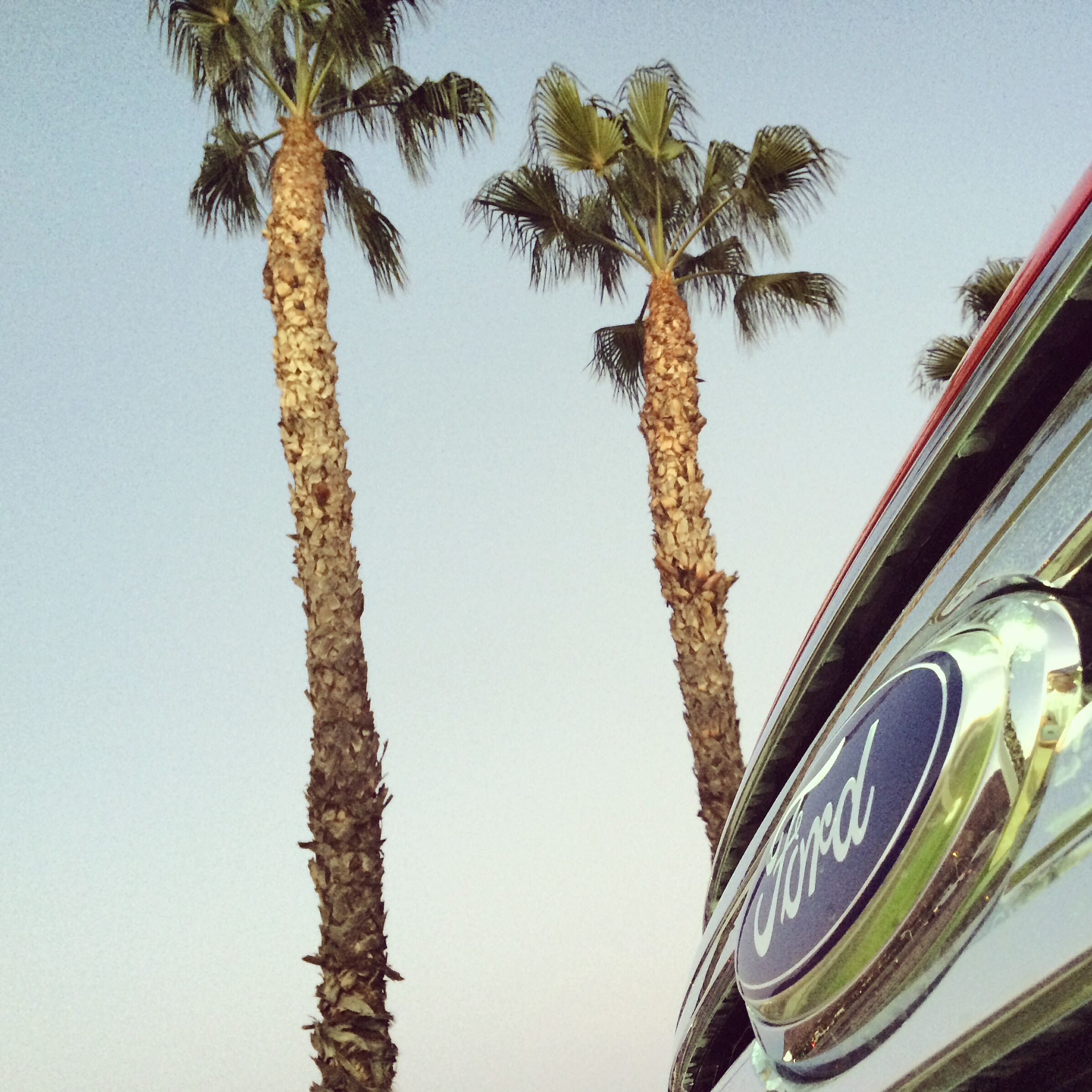 Blue skies, Blue Ovals and palm trees....