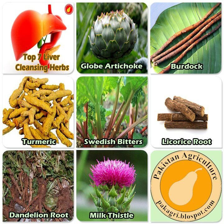 Best herbs for the liver