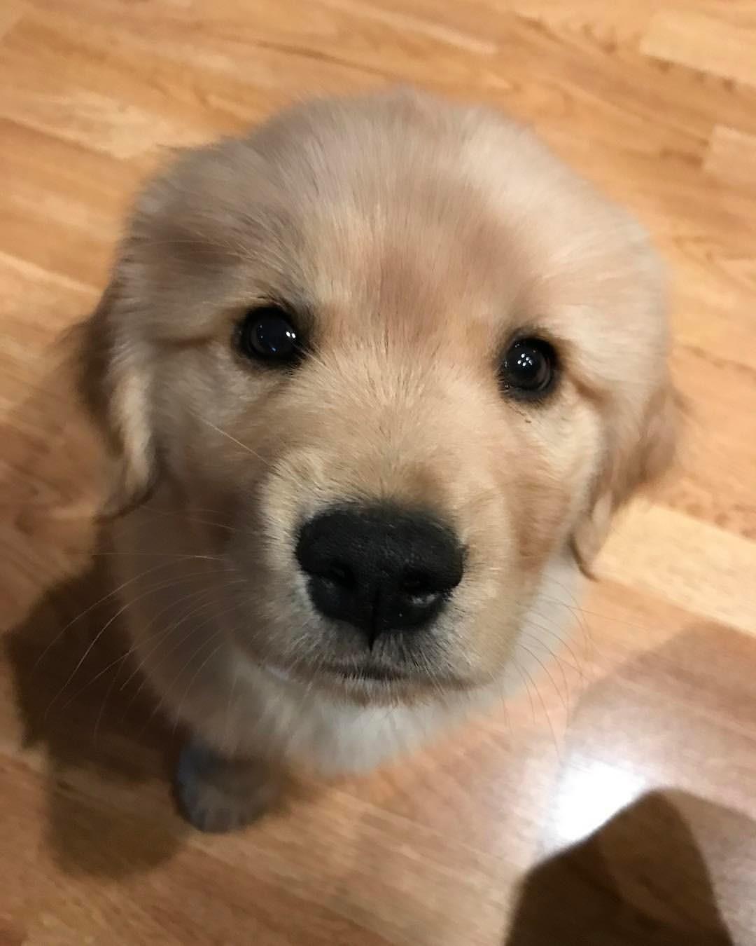 Cute little puppy So cute Pinterest