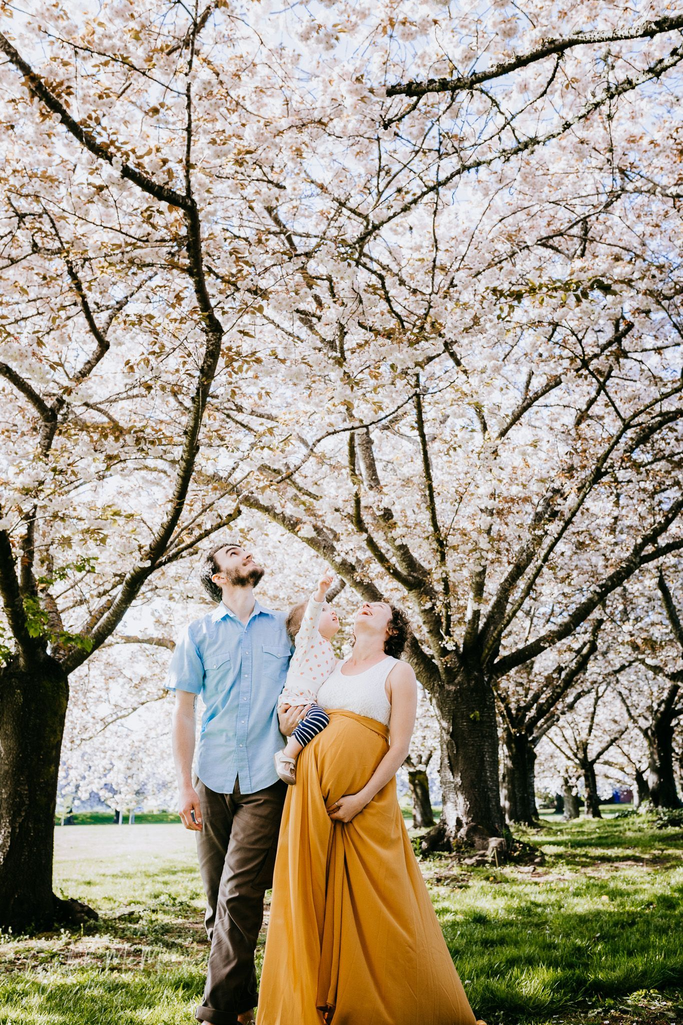 Spring Cherry Blossom Family And Maternity Portraits With Long Yellow Skirt In Orchard Crystal Digital Photography Backdrops Photography Beautiful Photography