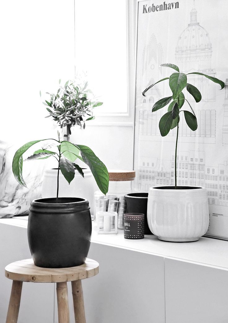 Freitag Style Kamerplanten, Decoratie, Planten