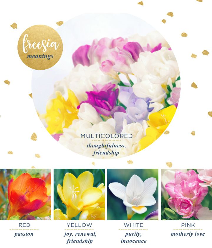 Freesia Meaning And Symbolism Ftd Com Flower Meanings Friendship Flowers Freesia Flowers