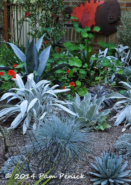 JJ De Sousa's bold garden digs: Portland Garden Bloggers Fling | Digging, love the silver color and the metal piranha art in the background. Stachys 'Bello Grigio' with an agave and orange nasturtiums