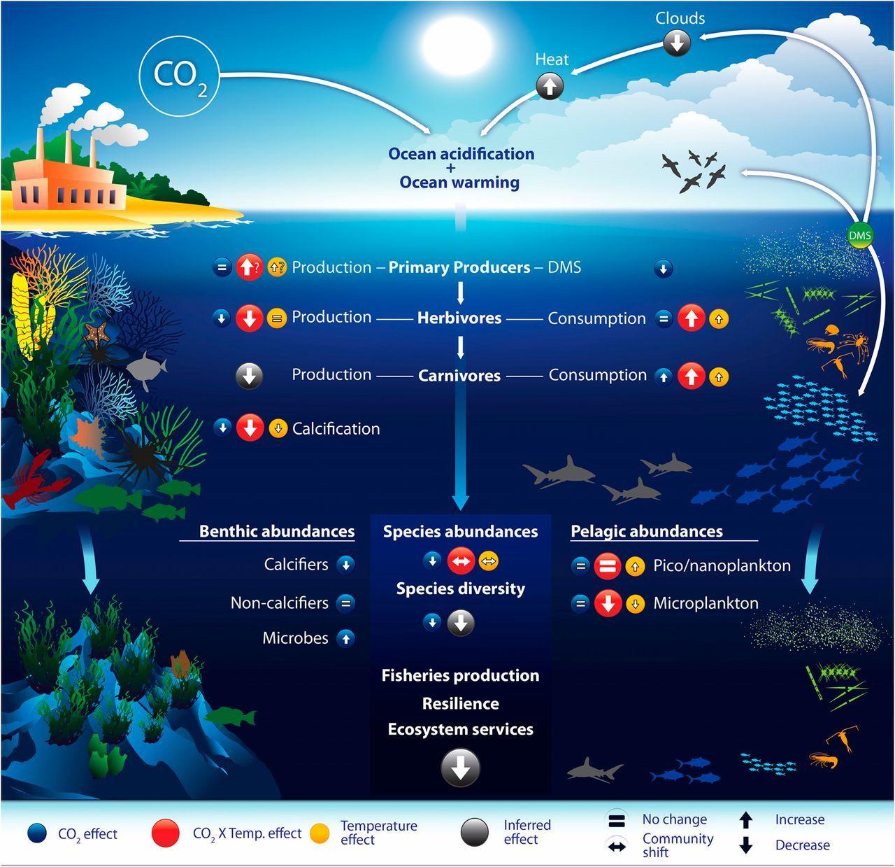 Image Result For Ocean Zones