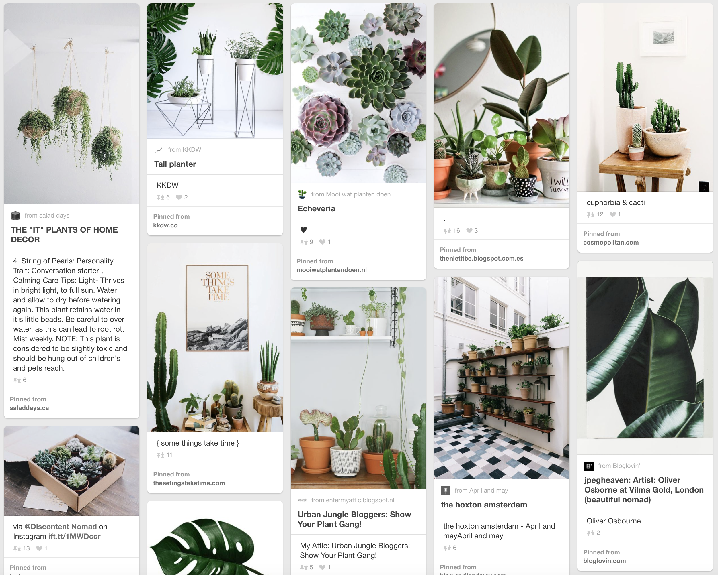 Scandi Six Plants That Will Survive Your Apartment In Winter