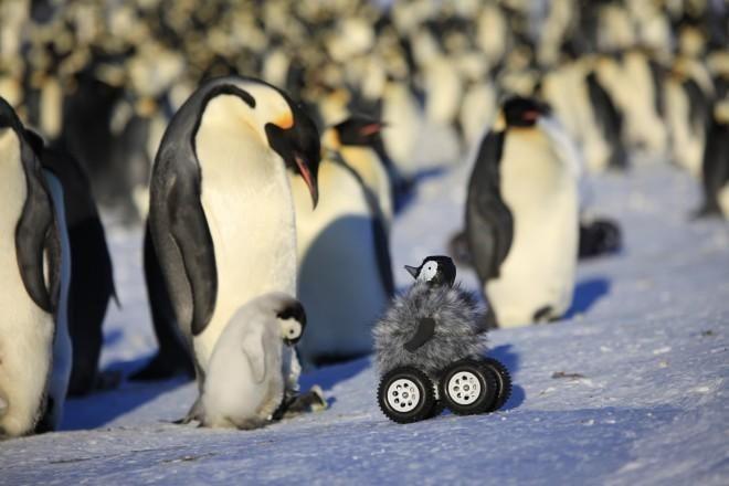 フランスの研究グループが雛に見せかけた「キュート」なリモコン式ローヴァーを使ってペンギンの生態調査を行っている。 http://buff.ly/10vM70n