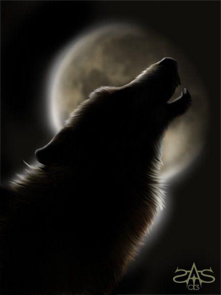 Le Loup A La Pleine Lune Loup Garou Loup Loup Noir
