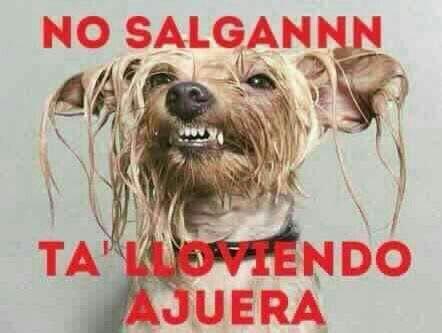 Lleva Siempre Una Sombrilla Perros Mojados Fotografias De Perros Retratos De Perros