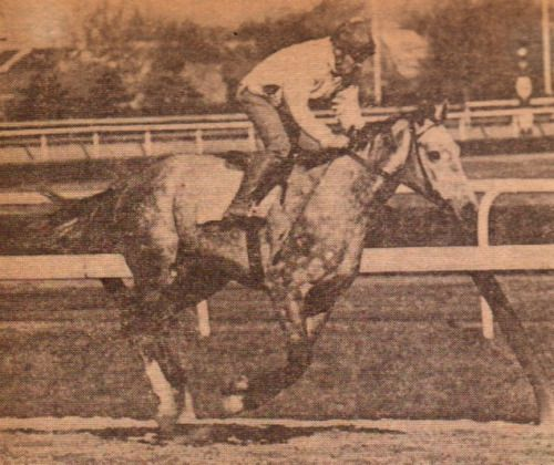 High Echelon, 1970 Belmont Stakes winner (With images) | Belmont ...