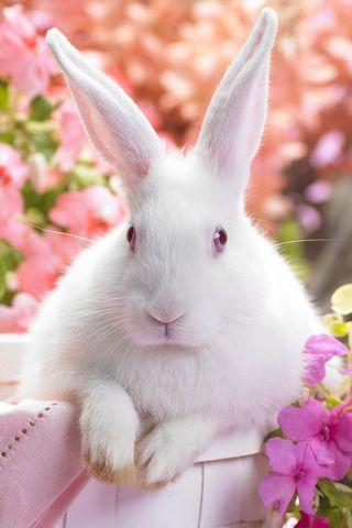 I Think It Is The Real Easter Bunny