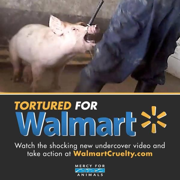Did You Know That Walmart Is A World Leader In Animal Cruelty It Supports Gestation Crates For Pigs Boycott Walm Mercy For Animals Gestation Crates Animals