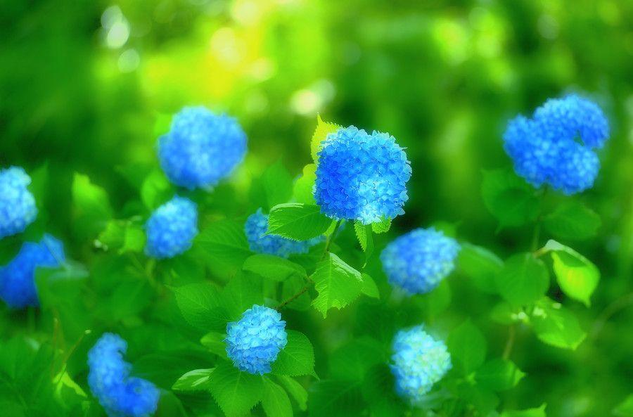 印象のブルー by Katsumi Uemura on 500px