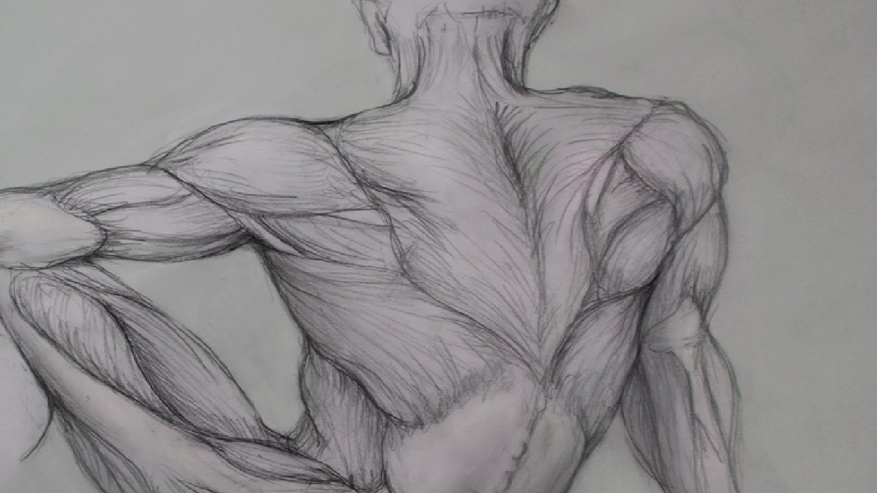 Figure drawing lessons 6 8 anatomy drawing for artists drawing human anatomy