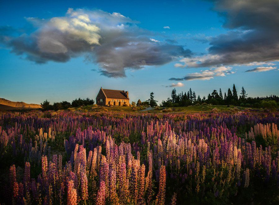 The Lupins at Lake Tekapo from #treyratcliff at www.StuckInCustom... - all images Creative Commons Noncommercial. #newzealand
