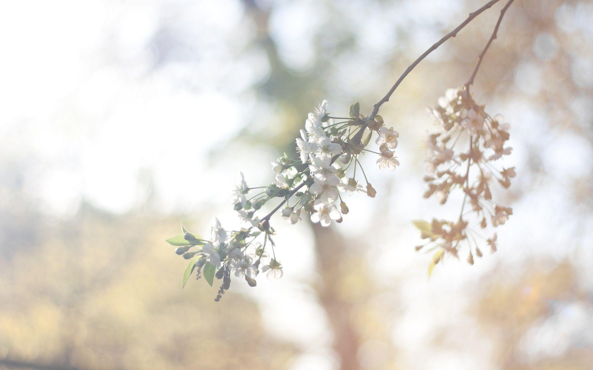 Pin by Malik Shaizy on Hand u Flowers Pinterest Vintage