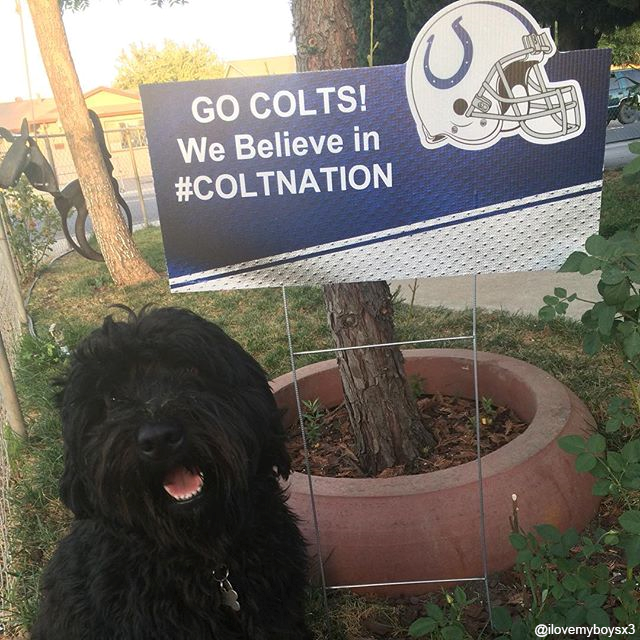 This playful pooch knows where his loyalties lie. Stop by