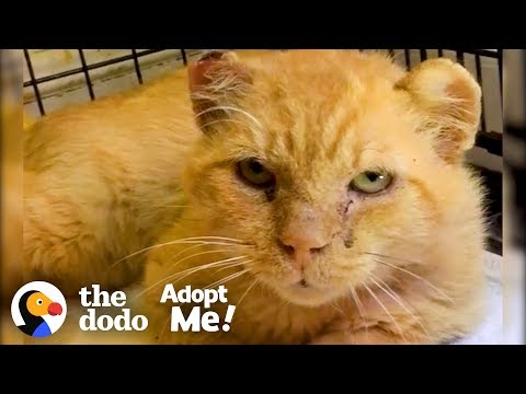 Feral Cat Goes From Hissing To Purring The Dodo Adopt Me