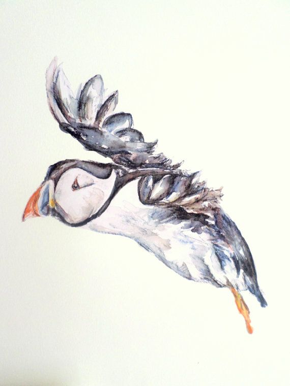 Puffin Wall Stickers Puffins Puffin Art Bird Wall Decal
